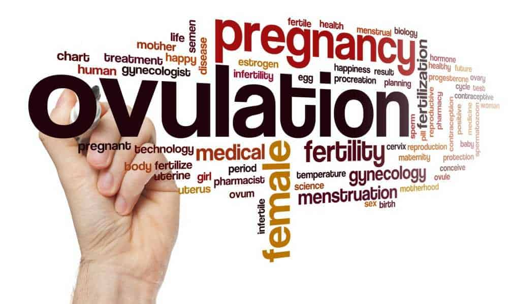 Understanding Ovulation and How It Affects Your Fertility