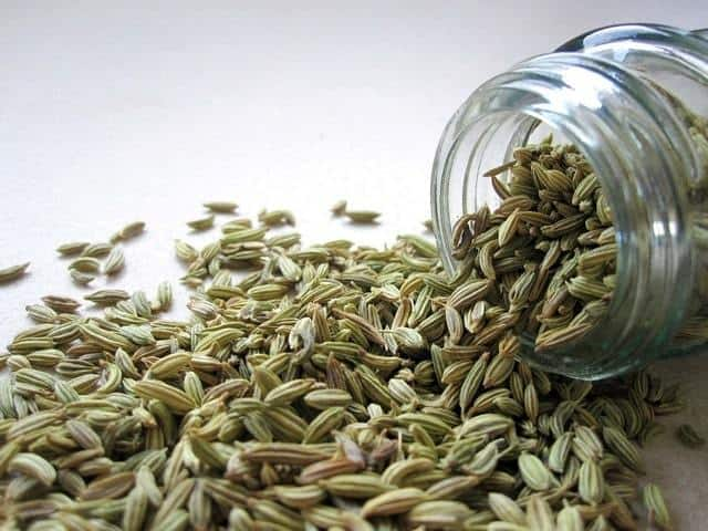 Fennel - Herbs for Menstrual Cramps